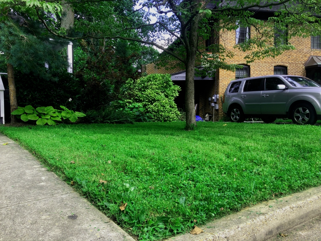 Green grass that has been freshly landscaped.